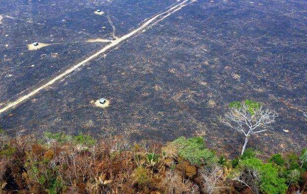 亚马逊雨林被烧后的场景