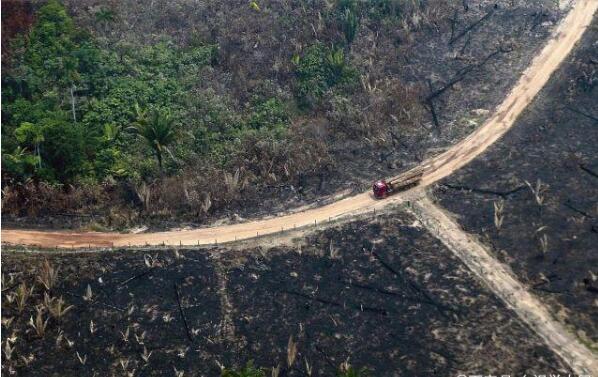 亚马逊雨林大火烧过的地方